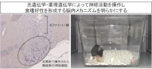 web用(福井大村田).jpg